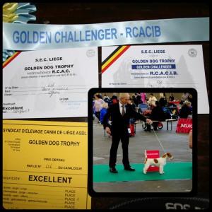 GOLDEN CHALLENGER - R.C.A.C.I.B.